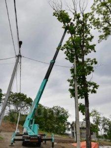 обрезка деревьев автовышкой